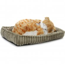 Perfect Petzzz Orange Tabbykatt