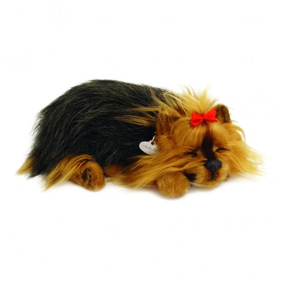 Perfect Petzzz Yorkshire Terrier